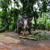 Travspire-Experience-Kerala-Elephant