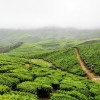 Travspire-Experience-tea-estate-Arjun-Bhat-3