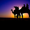 Camel Safari Sunset-1